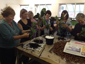 repotting at the orchid masterclass for beginners