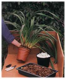you will need compost, crocks and secateurs to repot your orchid